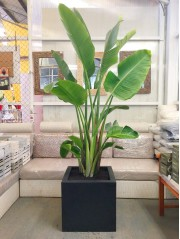 Strelitzia en Resina(DISPONIBLE SOLO PARA MADRID)