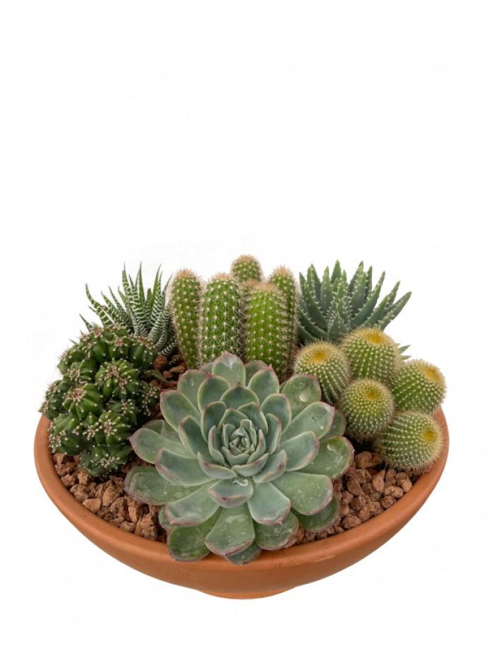 Centro de cactus en barro 35cm