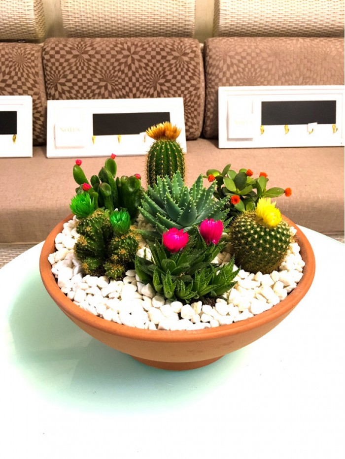 Centro de  cactus flor