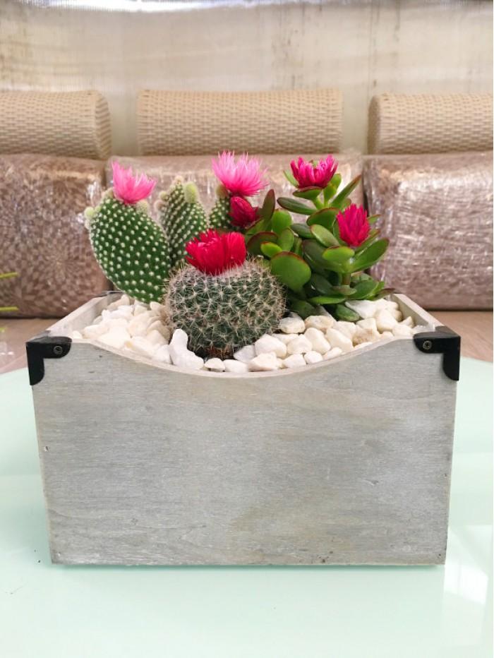 1 Centro de 3 cactus en madera