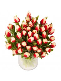 Bouquet de 40 tulipanes bicolor