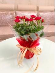 1 Rosal rojo decorado