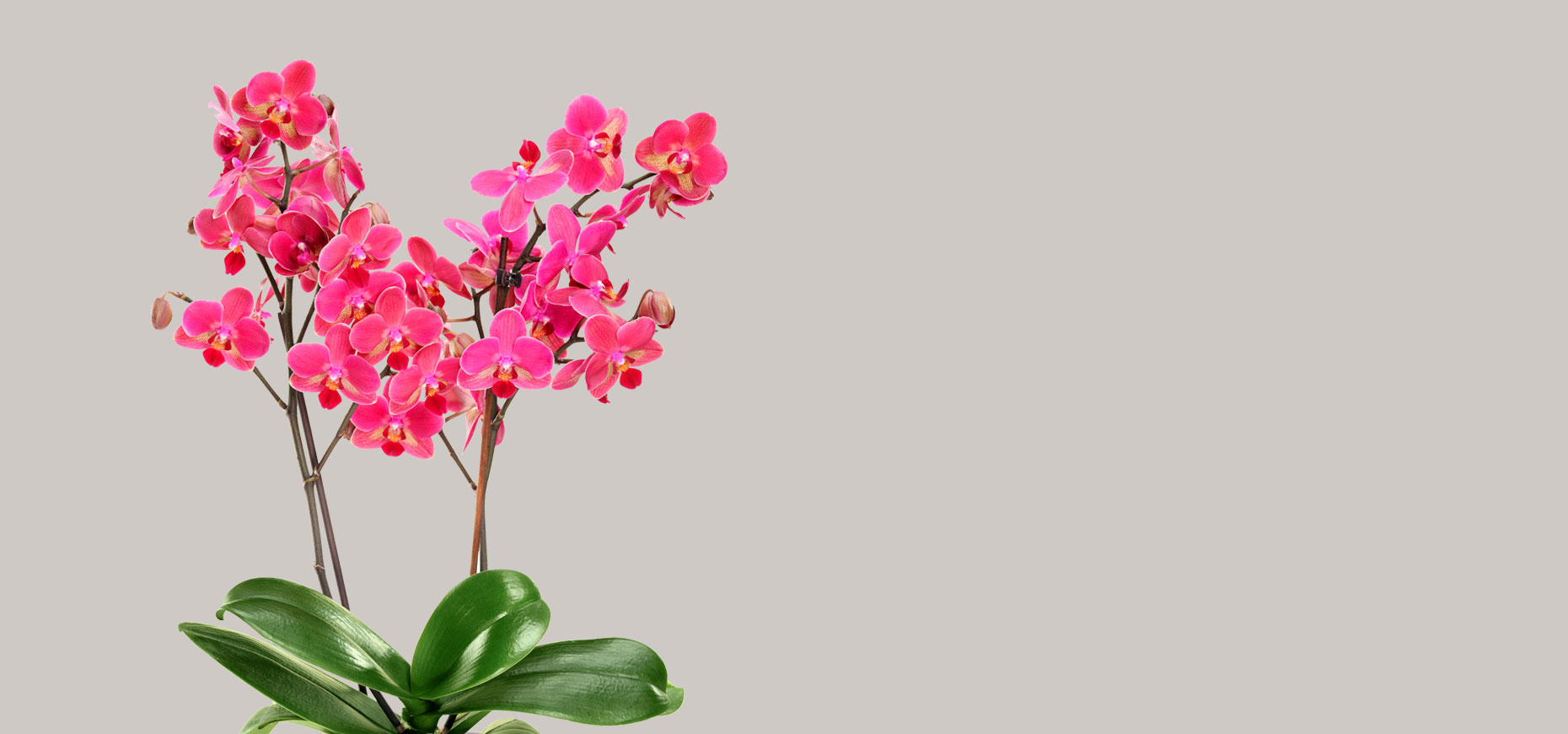 banner-principal-orquideas