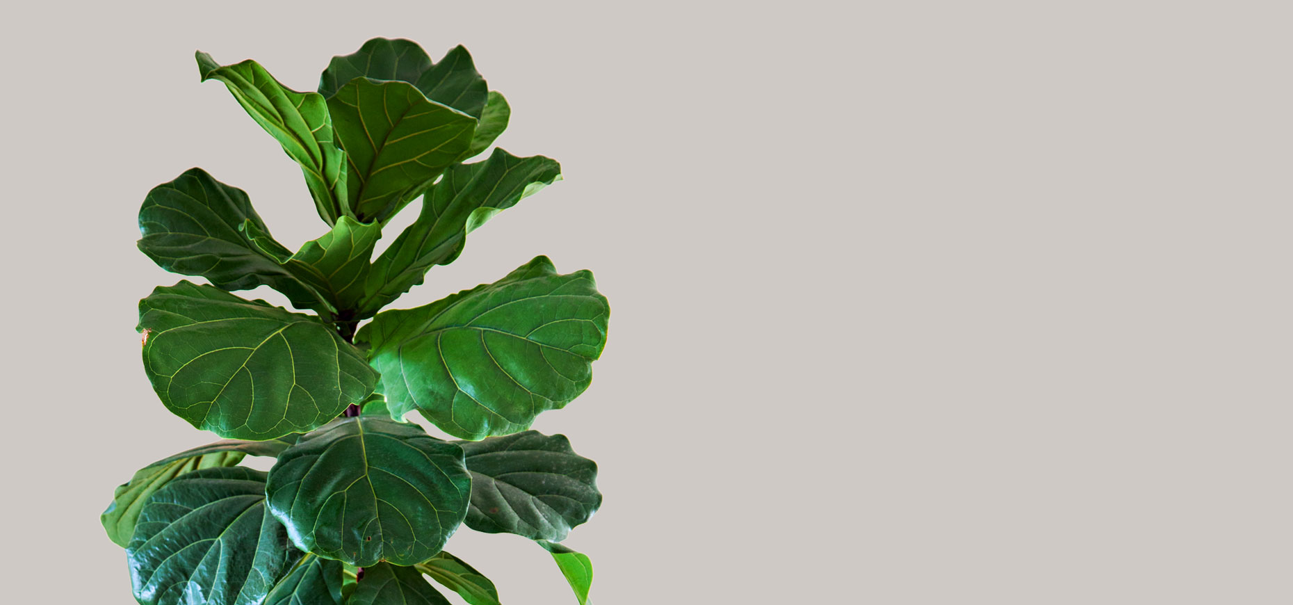 banner-principal-plantas-de-interior